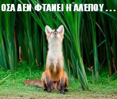 Όσα δεν φτάνει η αλεπού ...